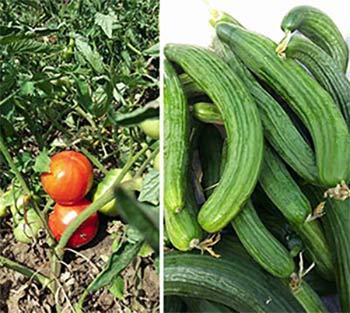 биопроизводители на пресни плодове и зеленчуци