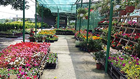 Производството на декоративна растителност - Еврис ООД