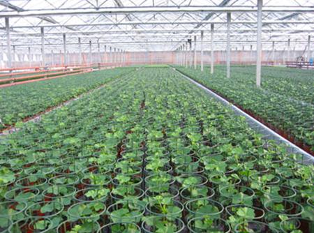 Оранжерия за производство нацветя