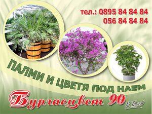 Палми и цветя под наем