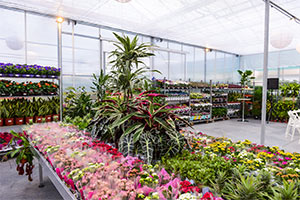 Борса за цветя Проплантс, София