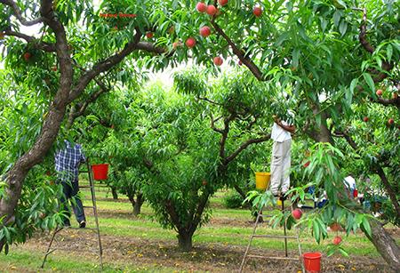 Натурал Баланс - овощни дръвчета