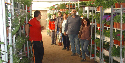 Качествени сезонни растения - Albanidis Floriculture Products