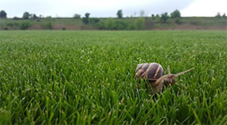 Производство на тревен чим - Conix Green