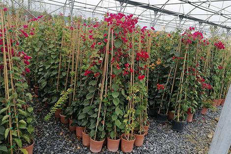 декоративни растения Modagri