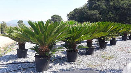 Градински декоративни растения - Modagri Plants