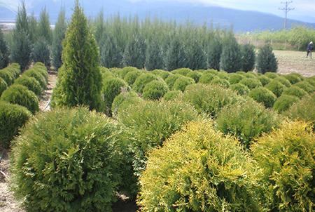 Разсадник за декоративни растения - Green Garden, град Септември