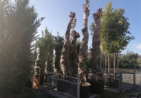 декоративни растения - Modagri Plants.