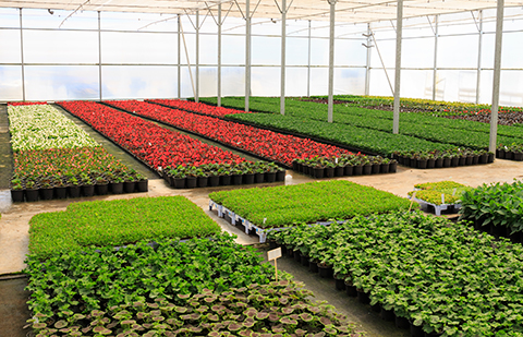 Асоциация производителите растения