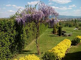 Озеленяване от градински център Албиция