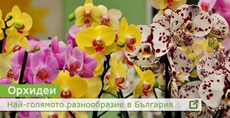 Борса за цветя - Plants BG