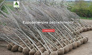 Производство и продажба на ЕДРОРАЗМЕРНИ дървета