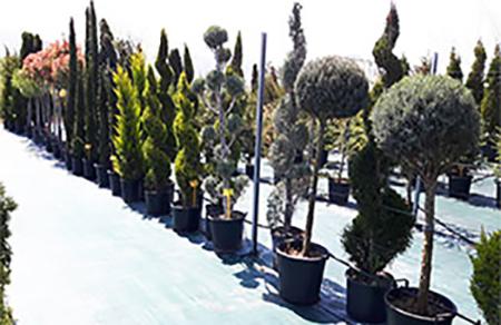 Градински център Зелена Линия