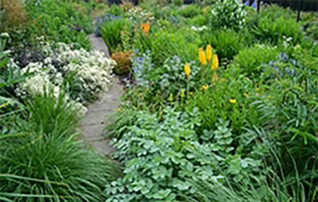 Карталов гарден - български растения