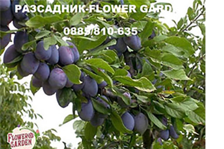 Овощен и декоративен разсадник FLOWER GARDEN
