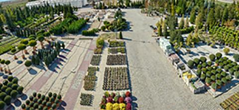 Градински център - Флора Дизайн Пловдив