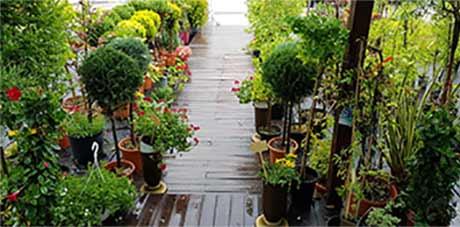 Градински център & озеленяване - Студио Ландшафт