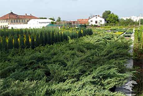 Декоративни растения - Хоум Гарден ТТ ЕООД