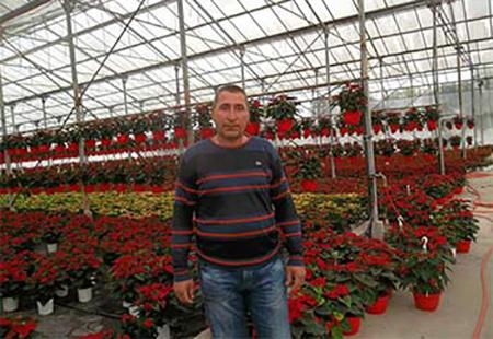 Милениум Цвет - декоративна растителност Йовко