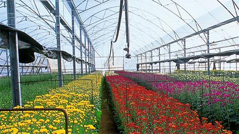 Напояване - Продукти за градината