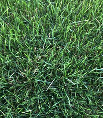 ОФИКА - производство тревен чим