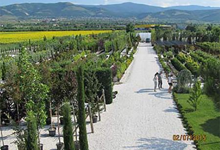 ОЛЕА Декоративна Растителност Пловдив