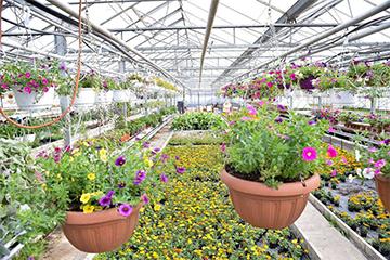 Плантава - търговия с цветя София