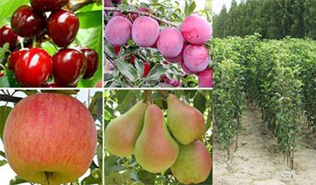 Овощен разсадник Йорданов