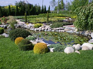 Флора Дизайн озеленяване