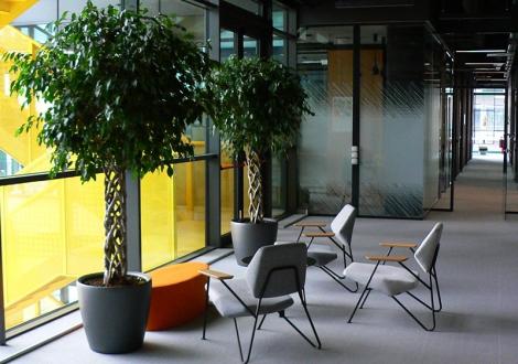 Цветни идеи – озеленяване на офиси, заведения, тераси