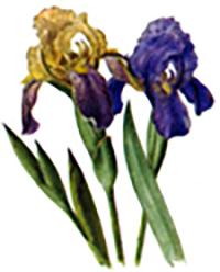 Великденски цветя