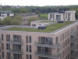 зелен покрив в София