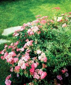 Едноцветна градина