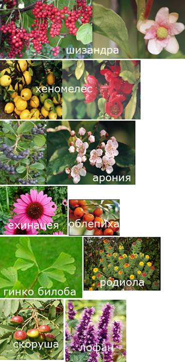 Известни лечебни растения