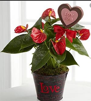 valentin's pots