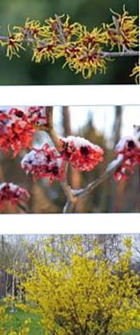 Храсти в градината през зимата
