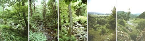 Крайпътни ландшафтни парков