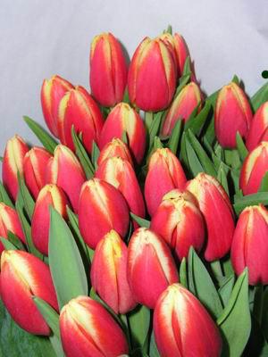 Лалета - любими пролетни цветя