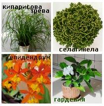 Растения за мокро помещение