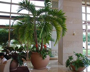 Избор на палма за закрито