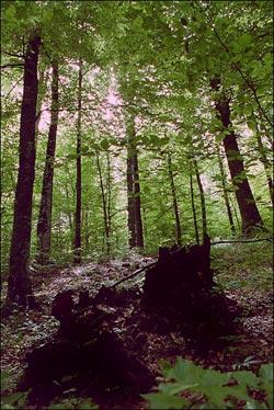 планината, гората