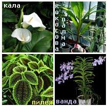 Растения за бани