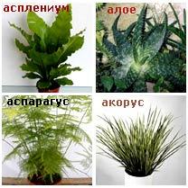 растения за баня