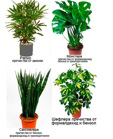 Стайни растения пречистващи въздухa