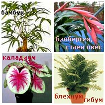 Растения подходящи за мокри помещения
