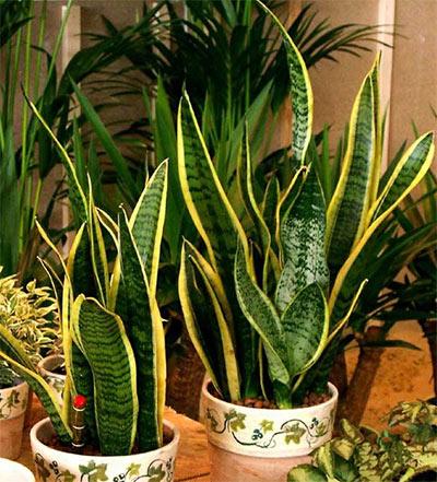 Растения, виреят на тъмно