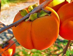 Райска ябълка, истински витаминен коктейл