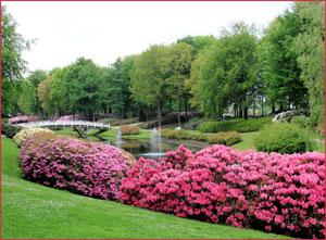 Рододендрони край водна площ
