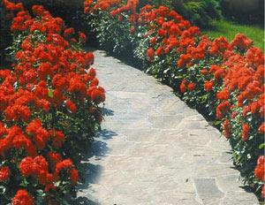 Розите в двора , компактни цветни фигури