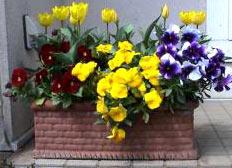 Кашпа за цветя